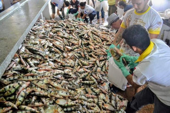 Vereador Gelson Moraes avalia distribuição de pescado em Parintins