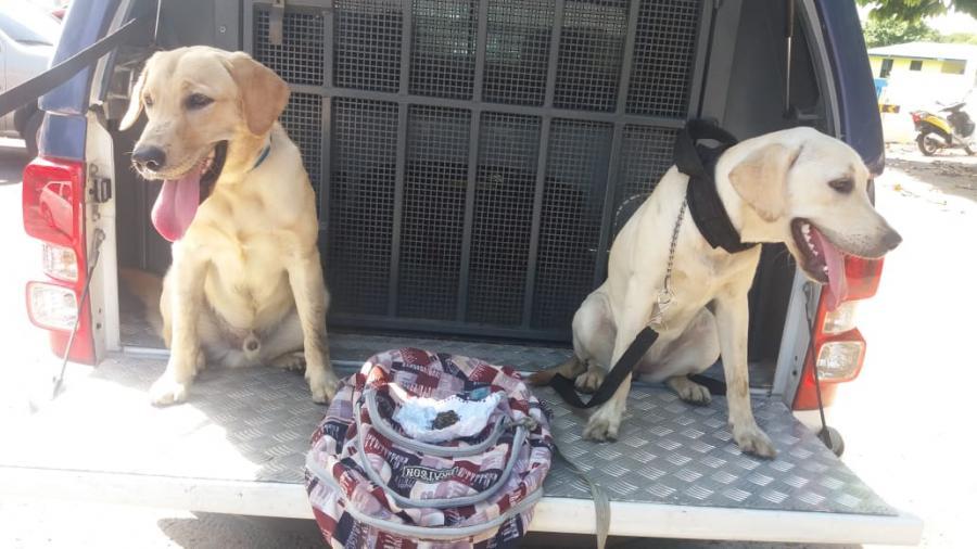 Cães da PM de Parintins encontram bolsa com entorpecente no porto de Parintins