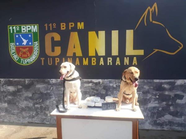 Mulher de 26 anos é presa por tráfico de drogas em Parintins com ajuda de cães farejadores